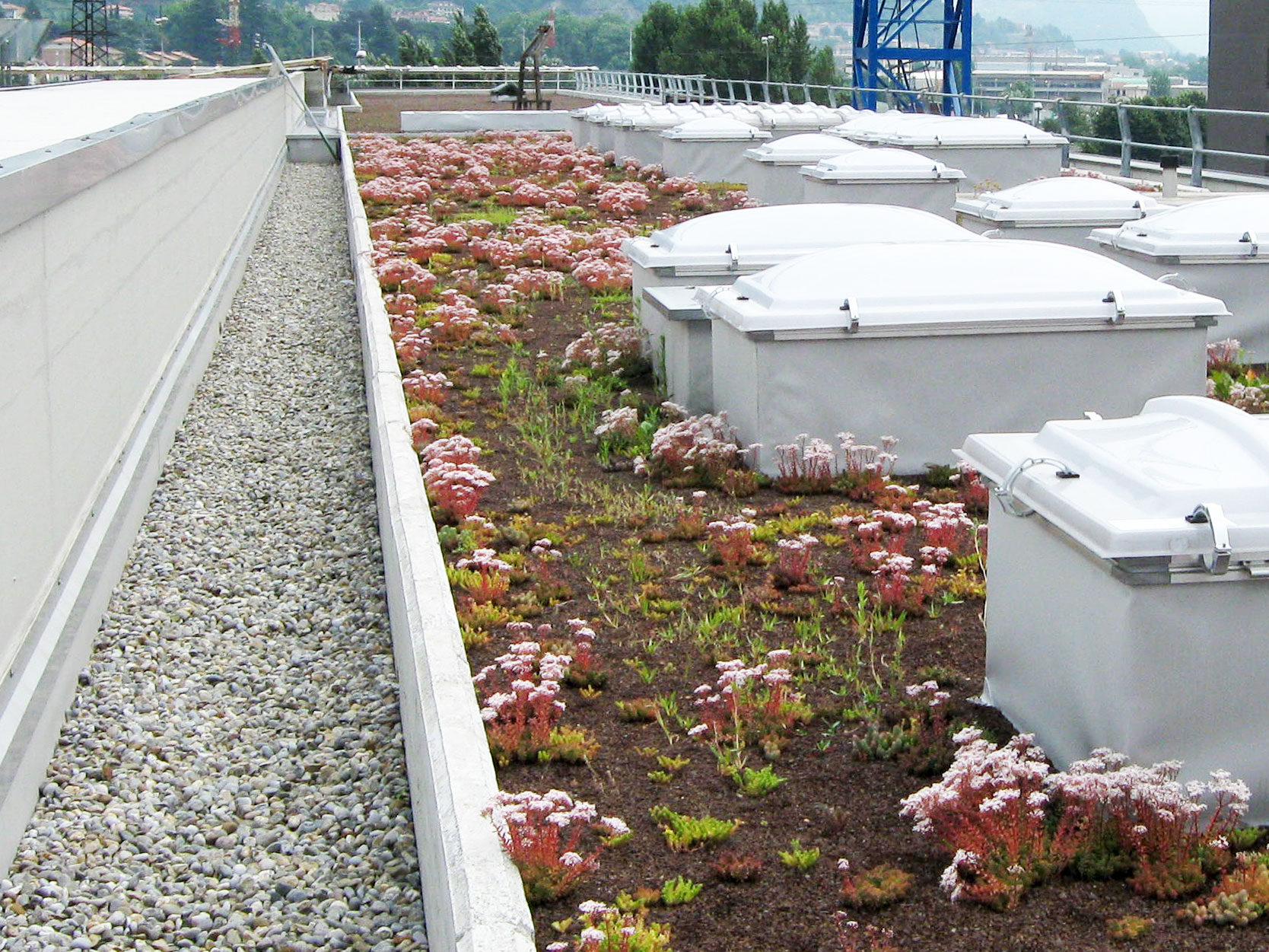 Giardini pensili e tetti verdi saci srl brescia for Giardini pensili